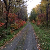 TransCanada Trail near Upper Kent, NB