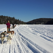 Dog Sledding at Haliburton Forest