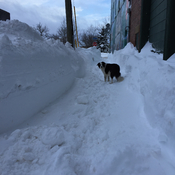 Snow tunnels for sidewalks