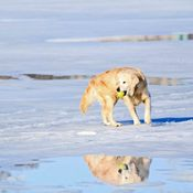 Dog's Reflection on Lake Simcoe