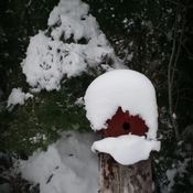 bird house on the trail