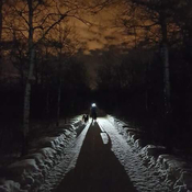 Night sled through Assiniboine Forest!