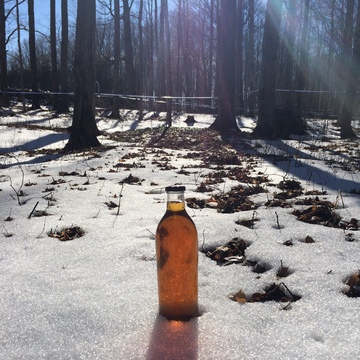 The Magic of Maple Syrup