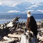 My Vancouver Island Eagle Trail