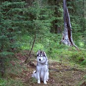 Kita watcher of the woods