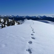 Spectacular views on Mt. Seymour