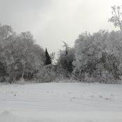 frostly trees