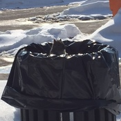 Squirrel In Bin Surrounded By Snow