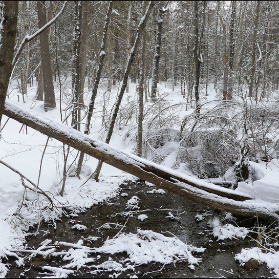 Active Weather