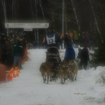 2017 Canadian Challenge Sled Dog Race
