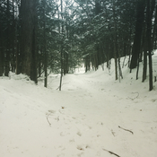 Winter Woods Walk
