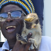 To Monkey around in Barbados