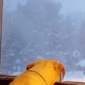diesel watching the storm yesterday