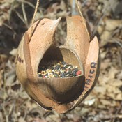 Coconut Shell LoveBirds Feeder
