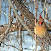 These are photos of birds I took at the Bird Sanctuary near Cornwall Ontario.