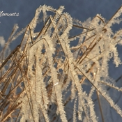 Crystal Grasses