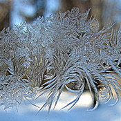 Jack Frost at My Window