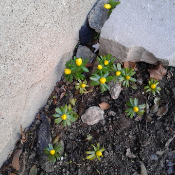 Cute flowers popping up in the middle of winter!