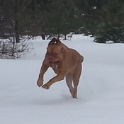 Roxi loves Snow!