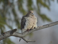 Even the birds are freezing! - Tilbury, Chatham-Kent, ON