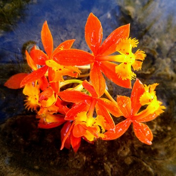 SunShine Orchids Encapsulated in a Water Bubbles!