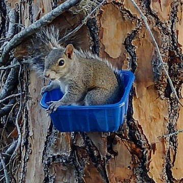 Squirrels​ Perch!