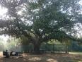 Lawrance Garden aka Bagh e Jinnah - Lahore, PB