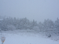 Oh no...a new kind of Spring?? - Louisbourg, NS, CA
