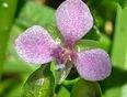 A Tiny Flower!