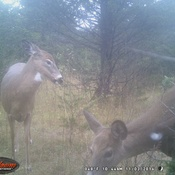 last years pic off trail cam