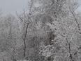 SNOW!!!!! - Ottawa, ON