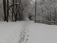 Morning walk - Kanata, ON