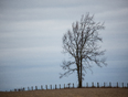 Lonely Tree On A Grey Evening - Uxbridge, ON
