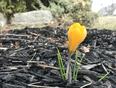 Spring in Burlington  - Burlington, Ontario | L7L 6G7