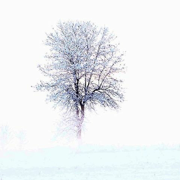 In the ice fog