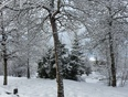Snowy spring morning - Ottawa, ON
