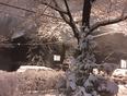 Winter ?? wonderland  - Montréal, QC, CA