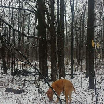 Roxi's spring walk in the snow!