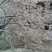 pretty snow fall