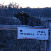 I will trespass if I want to