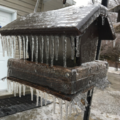 Icy bird house