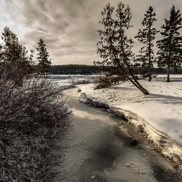 Winter at the Riding Mountain National Park