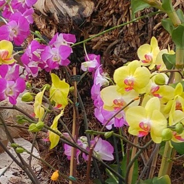 Colorful Orchids!