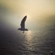 Seagull on the Lake Ontario
