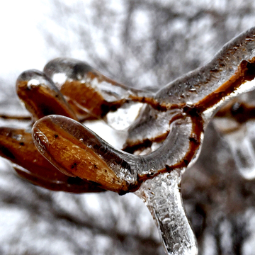 Icy branch.