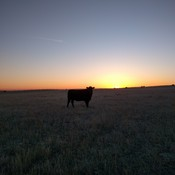Beautiful Morning for checking cows!!