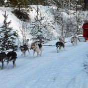 Mushing the Trans Canada Trail.