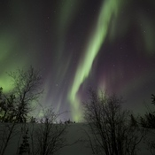 Aurora Nights