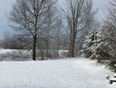Snow storm  - Manotick, ON, CA