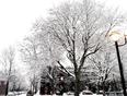Snowy Montreal  - Montréal, QC